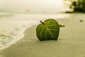 Greenwashing – Was ist das?